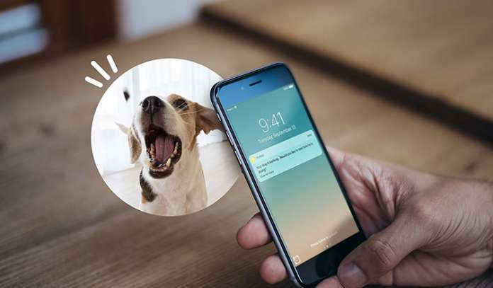 Best Gadgets for Dog Owners
